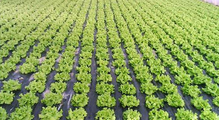 Film para producción agrícola y protección del suelo